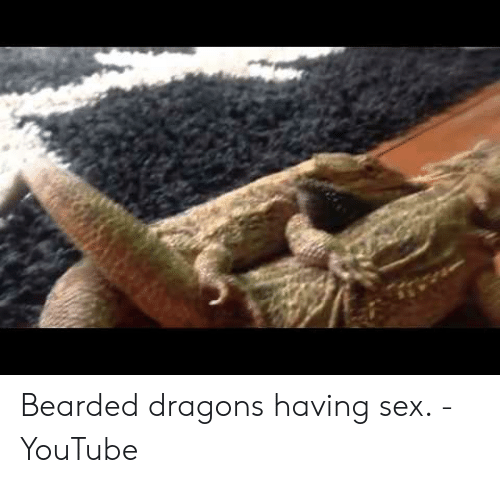 Want To Easily Sex Your Bearded Dragon