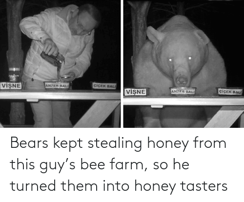 bee: Bears kept stealing honey from this guy's bee farm, so he turned them into honey tasters