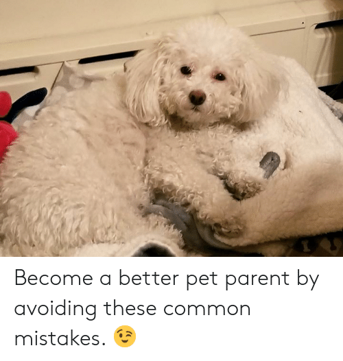 Memes, Common, and Mistakes: Become a better pet parent by avoiding these common mistakes. 😉