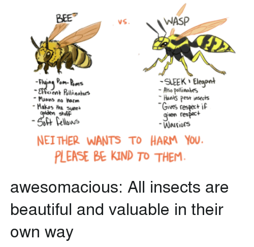 wasp: BEE  WASP  SLEEK Eleaont  cient Polli nators  Also pollinales  Hants Pest insects  Gives respeci  given respact  Muons no harm  stutF  Pellows  NEI THER WANTS TO HARM YOU  LEASE BE KIND TO THEM awesomacious:  All insects are beautiful and valuable in their own way