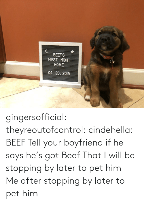 Beef: BEEF'S  FIRST NIGHT  HOME  04.28.2019 gingersofficial:  theyreoutofcontrol:  cindehella: BEEF Tell your boyfriend if he says he's got Beef That I will be stopping by later to pet him     Me after stopping by later to pet him