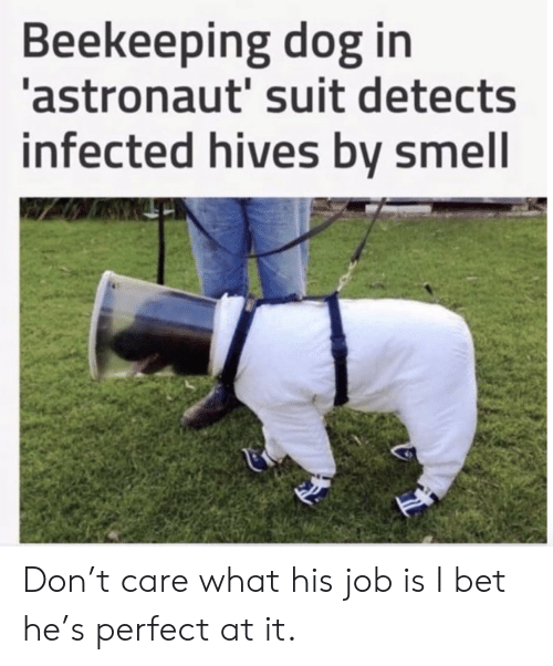 I Bet, Smell, and Dog: Beekeeping dog in  astronaut' suit detects  infected hives bv smell Don't care what his job is I bet he's perfect at it.