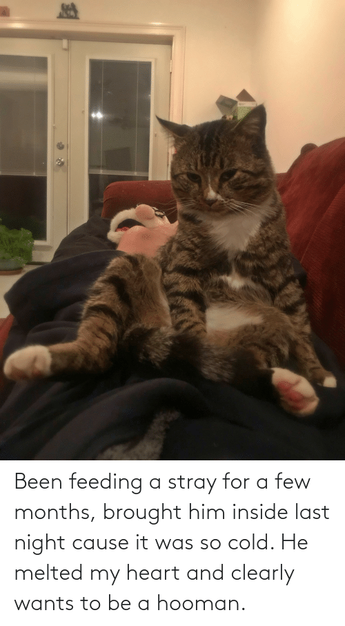 a-few-months: Been feeding a stray for a few months, brought him inside last night cause it was so cold. He melted my heart and clearly wants to be a hooman.