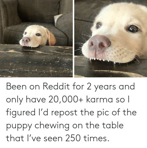 On The Table: Been on Reddit for 2 years and only have 20,000+ karma so I figured I'd repost the pic of the puppy chewing on the table that I've seen 250 times.
