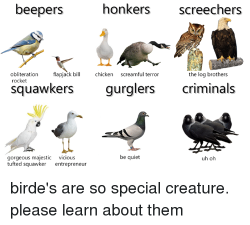 flapjack: beepers  honkers  screechers  obliteration  screamful terror  flapjack bill  chicken  the log brothers  rocket  Squawkers  gurglers  criminals  be quiet  gorgeous majestic  vicious  uh oh  tufted squawker entrepreneur birde's are so special creature. please learn about them