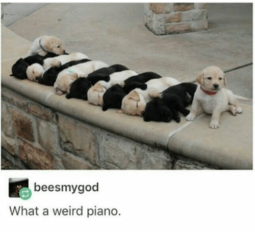 Weird, Piano, and What: beesmygod  What a weird piano.