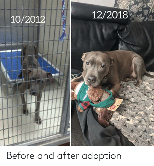 After: Before and after adoption