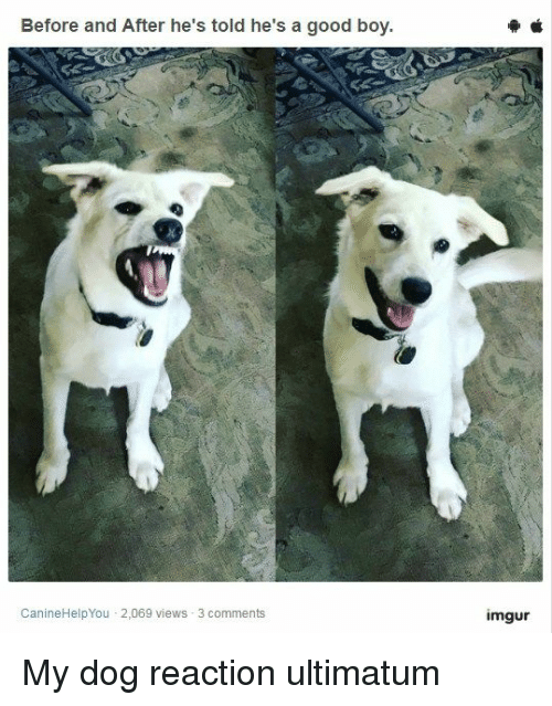 Funny, Good, and Imgur: Before and After he's told he's a good boy  CanineHelpYou 2,069 views 3 comments  imgur