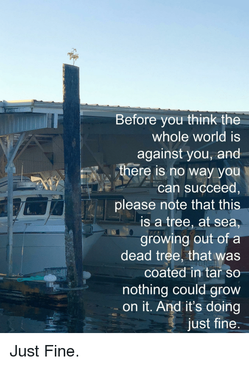 Dead Tree: Before you think the  whole world is  against you, and  there iS no way you  can succeed,  please note that this  is a tree, at sea,  growing out of a  dead tree, that was  coated in tar so  nothing could grow  on it. And it's doing  just fine  ARMIN <p>Just Fine.</p>