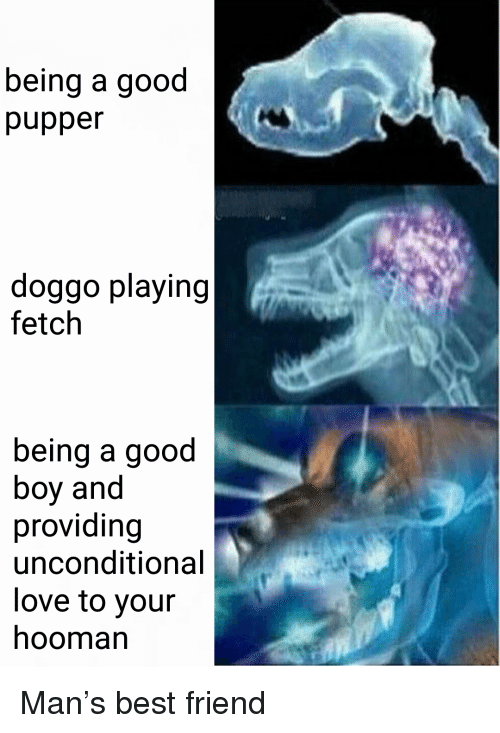 Best Friend, Love, and Best: being a good  pupper  doggo playing  fetch  being a good  boy and  providing  unconditional  love to your  hooman <p>Man's best friend</p>