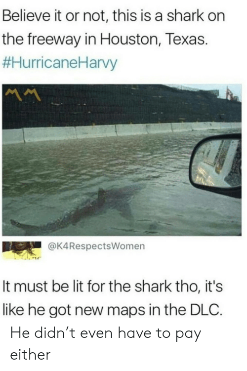 Not This: Believe it or not, this is a shark on  the freeway in Houston, Texas.  #HurricaneHarvy  MM  @K4RespectsWomen  It must be lit for the shark tho, it's  like he got new maps in the DLC. He didn't even have to pay either