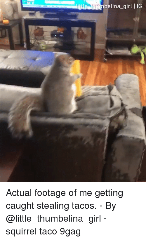 9gag, Memes, and Girl: belina_girl I IG Actual footage of me getting caught stealing tacos. - By @little_thumbelina_girl - squirrel taco 9gag