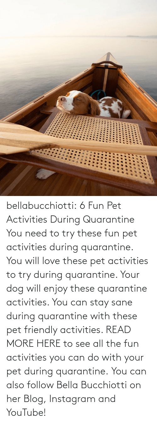 Activities: bellabucchiotti:  6 Fun Pet Activities During Quarantine    You need to try  these fun pet activities during quarantine. You will love these pet  activities to try during quarantine. Your dog will enjoy these  quarantine activities. You can stay sane during quarantine with these  pet friendly activities.   READ MORE HERE to see all the fun activities you can do with your pet during quarantine.  You can also follow Bella Bucchiotti on her Blog, Instagram and YouTube!