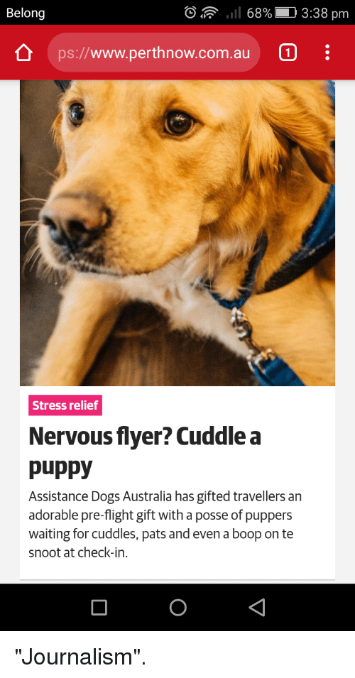 """Dogs, Australia, and Flight: Belong  """"Il 68%  3:38 pm  ps://www.perthnow.com.au  1  Stress relief  Nervous flyer? Cuddle a  puppy  Assistance Dogs Australia has gifted travellers an  adorable pre-flight gift with a posse of puppers  waiting for cuddles, pats and even a boop on te  snoot at check-in. """"Journalism""""."""