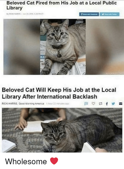 beloved: Beloved Cat Fired from His Job at a Local Public  Library  Beloved Cat Will Keep His Job at the Local  Library After International Backlash  RICKS HARRIS, Good Morning Amenca 1  22u Wholesome ❤️