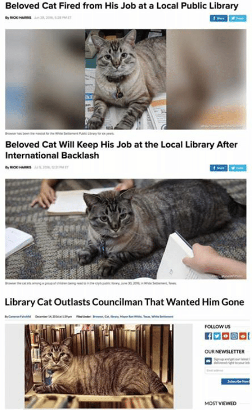beloved: Beloved Cat Fired from His Job at a Local Public Library  at  Beloved Cat Will Keep His Job at the Local Library After  International Backlash  Library Cat Outlasts Councilman That Wanted Him Gone  FOLLOW US  MOST VIEWED