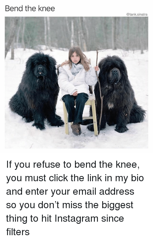 Click, Funny, and Instagram: Bend the knee  @tank.sinatra If you refuse to bend the knee, you must click the link in my bio and enter your email address so you don't miss the biggest thing to hit Instagram since filters