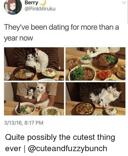 Dating, Memes, and Quite: Berry  @PinkMiruku  They've been dating for more than a  ear now  3/13/16, 8:17 PM Quite possibly the cutest thing ever | @cuteandfuzzybunch