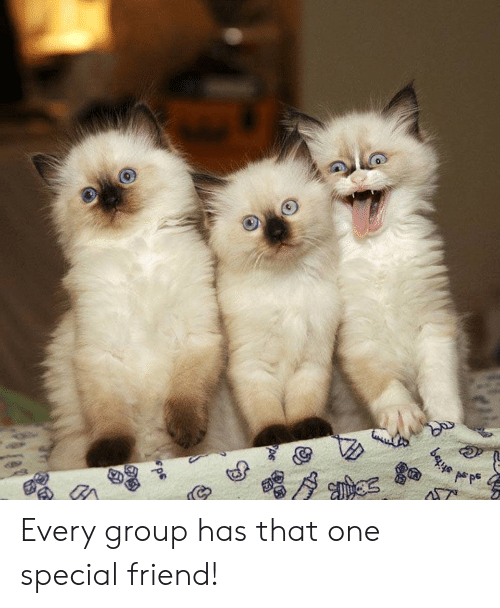 One, Friend, and Group: bes Every group has that one special friend!