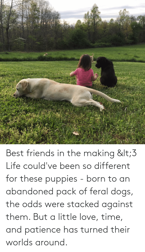 Patience: Best friends in the making <3 Life could've been so different for these puppies - born to an abandoned pack of feral dogs, the odds were stacked against them. But a little love, time, and patience has turned their worlds around.