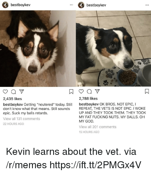 "retards: bestboykev  bestboykev  2,435 likes  2,788 likes  bestboykev Getting ""neutered"" today. Stil bestboykev OK BROS. NOT EPIC, I  don't know what that means. Still sounds  epic. Suck my balls retards.  View all 131 comments  22 HOURS AGO  REPEAT, THE VETS IS NOT EPIC. I WOKE  UP AND THEY TOOK THEM. THEY TOOK  MY FAT FUCKING NUTS. MY BALLS. OH  MY GOD  View all 201 comments  15 HOURS AGO Kevin learns about the vet. via /r/memes https://ift.tt/2PMGx4V"