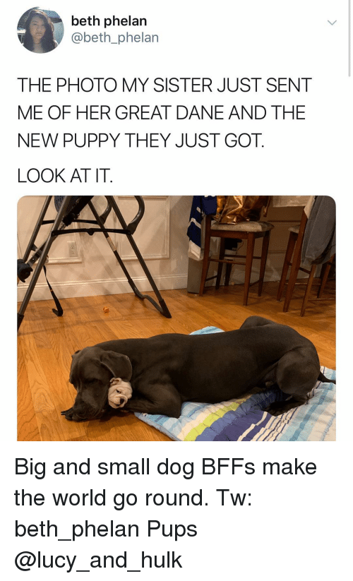 And The New: beth phelan  @beth_phelan  THE PHOTO MY SISTER JUST SENT  ME OF HER GREAT DANE AND THE  NEW PUPPY THEY JUST GOT.  LOOK AT IT. Big and small dog BFFs make the world go round. Tw: beth_phelan Pups @lucy_and_hulk