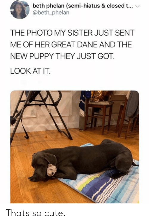 semi: beth phelan (semi-hiatus & closed t...  @beth_phelan  THE PHOTO MY SISTER JUST SENT  ME OF HER GREAT DANE AND THE  NEW PUPPY THEY JUST GOT  LOOK AT IT. Thats so cute.