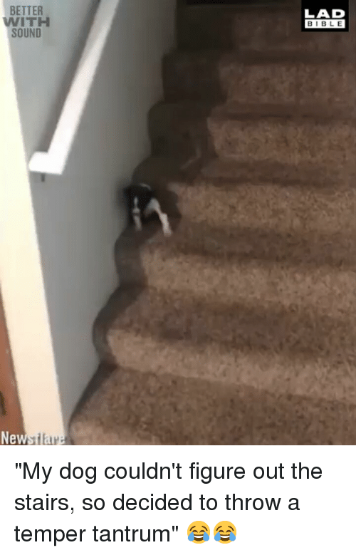 "Memes, Bible, and 🤖: BETTER  WITH  SOUND  LAD  BIBLE  New ""My dog couldn't figure out the stairs, so decided to throw a temper tantrum"" 😂😂"