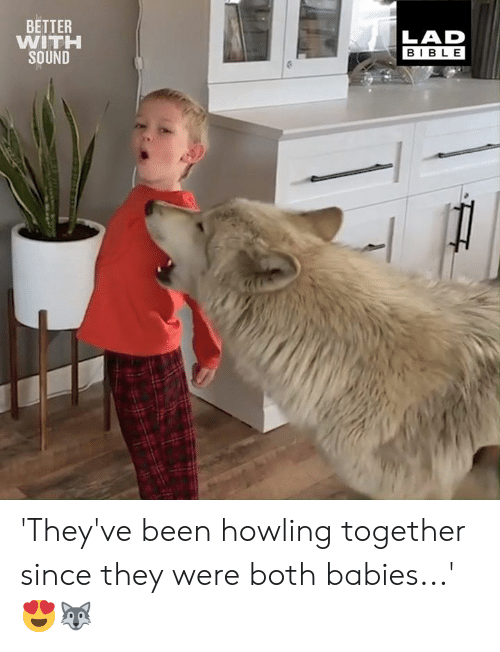 howling: BETTER  WITH  SOUND  LAD  BIBLE 'They've been howling together since they were both babies...' 😍🐺