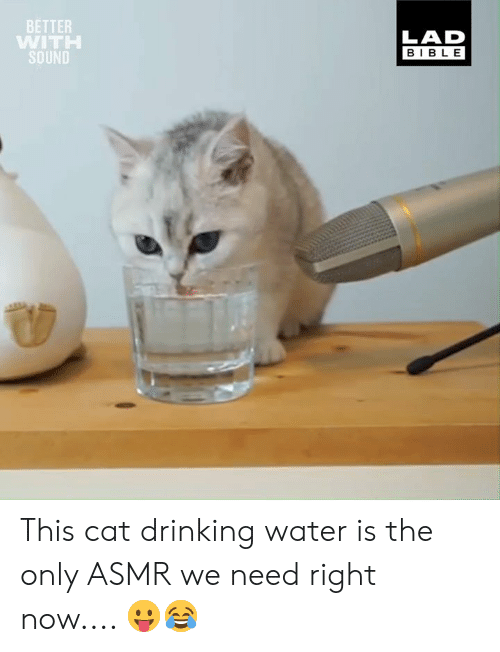 Asmr: BETTER  WITH  SOUND  LAD  BIBLE This cat drinking water is the only ASMR we need right now.... 😛😂
