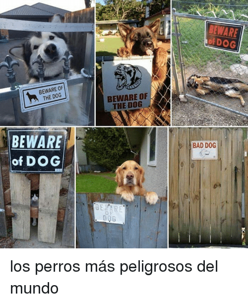 Bad, Dog, and Mundo: BEWARE  of DOG  BEWARE OF  THE DOG  BEWARE OF  THE DOG  BEWARE  of DOG  BAD DOG  D0G los perros más peligrosos del mundo
