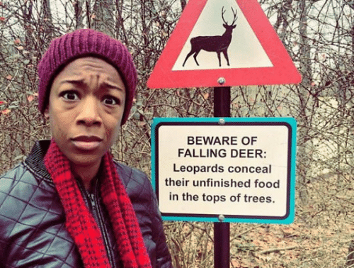 Trees: BEWARE OF  FALLING DEER:  Leopards conceal  their unfinished food  in the tops of trees.