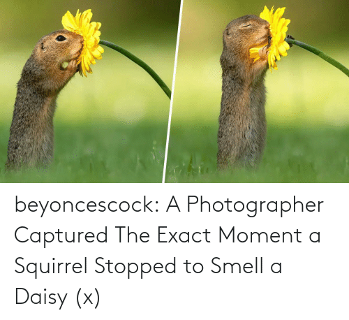 daisy: beyoncescock:   A Photographer Captured The Exact Moment a Squirrel Stopped to Smell a Daisy (x)