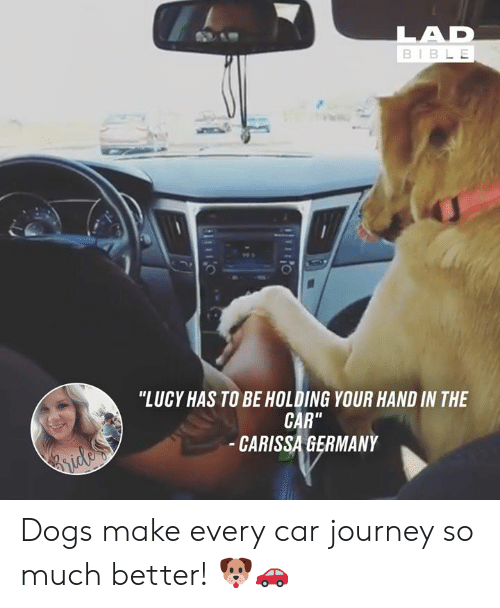 """Lucy: BIBL E  0  """"LUCY HAS TO BE HOLDING YOUR HAND IN THE  CAR""""  CARISSA GERMANY Dogs make every car journey so much better! 🐶🚗"""