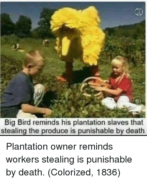 Big Bird: Big Bird reminds his plantation slaves that  stealing the produce is punishable by death Plantation owner reminds workers stealing is punishable by death. (Colorized, 1836)