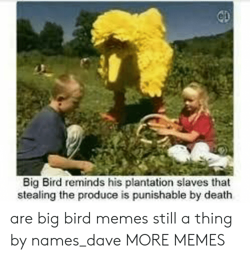 Big Bird: Big Bird reminds his plantation slaves that  stealing the produce is punishable by death are big bird memes still a thing by names_dave MORE MEMES
