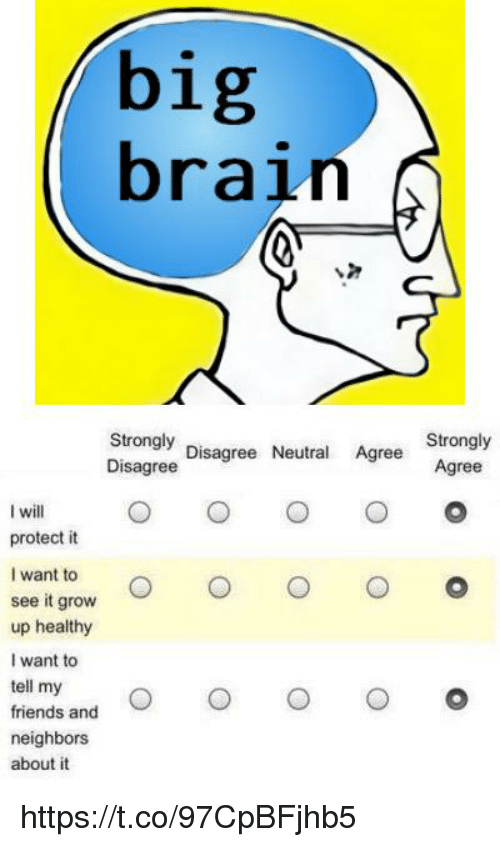 Friends, Brain, and Neighbors: big  brain  Strongly  Disagree  Strongly  Disagree Neutral Agree  I will  protect it  I want to  see it grow  O o  up healthy  I want to  tell my .。  friends and  neighbors  about it https://t.co/97CpBFjhb5