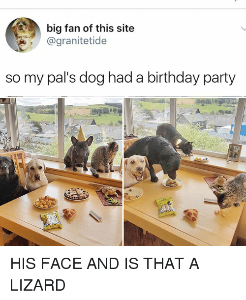 Birthday, Memes, and Party: big fan of this site  @granitetide  so my pal's dog had a birthday party HIS FACE AND IS THAT A LIZARD