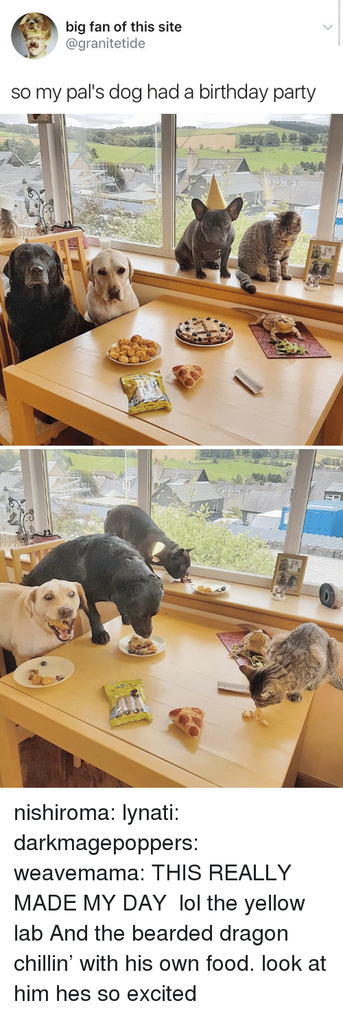 Bearded Dragon: big fan of this site  @granitetide  so my pal's dog had a birthday party nishiroma: lynati:  darkmagepoppers:  weavemama:  THIS REALLY MADE MY DAY  lol the yellow lab  And the bearded dragon chillin' with his own food.  look at him hes so excited