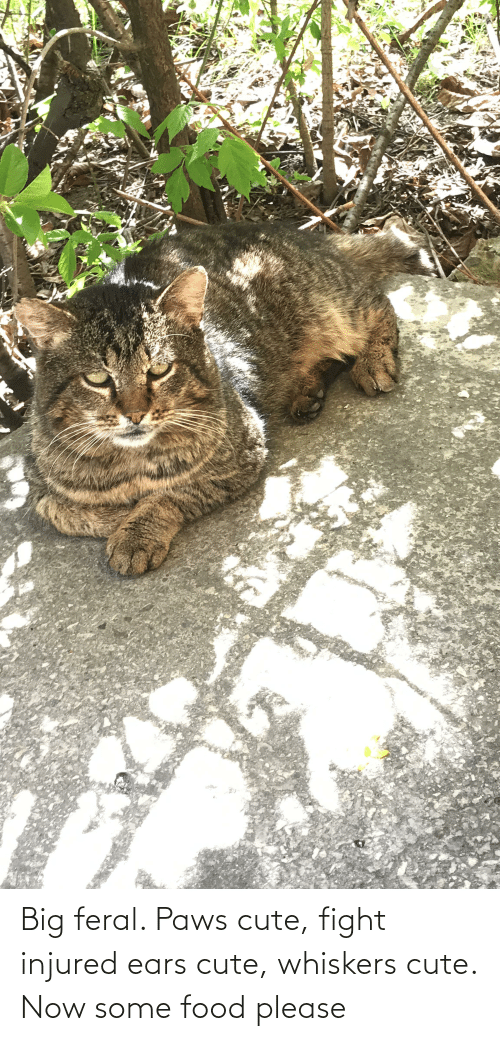 Paws: Big feral. Paws cute, fight injured ears cute, whiskers cute. Now some food please