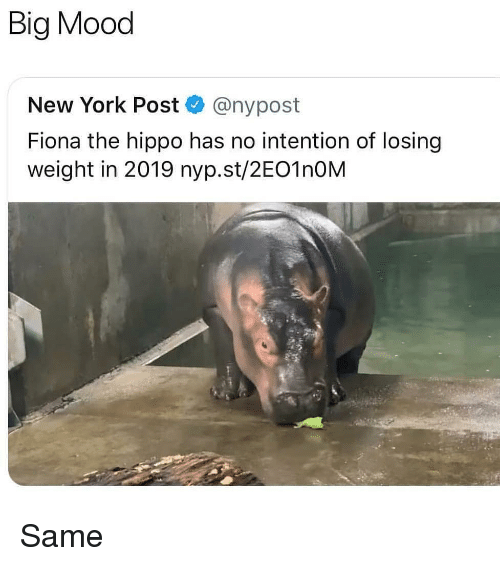Big Mood: Big Mood  New York Post @nypost  Fiona the hippo has no intention of losing  weight in 2019 nyp.st/2EO1nOM Same