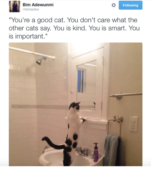 """Memes, 🤖, and The Others: Bim Adewunmi  Following  Obirmadiew  """"You're a good cat. You don't care what the  other cats say. You is kind. You is smart. You  is important."""""""