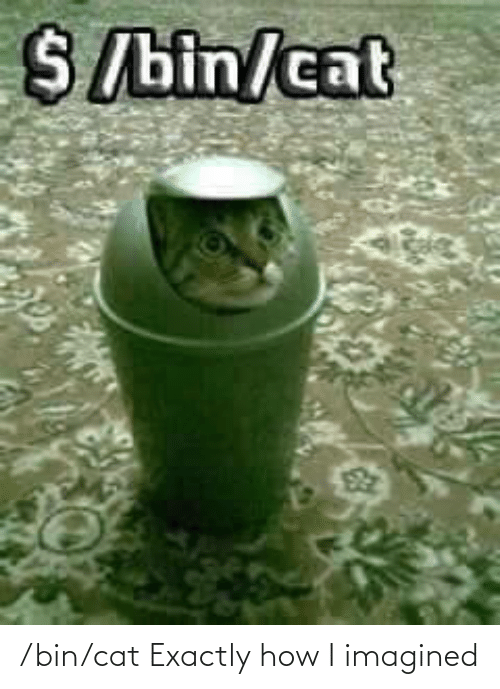 how: /bin/cat Exactly how I imagined