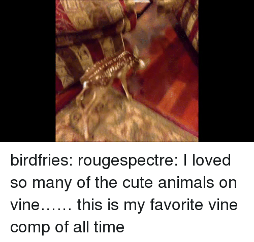 Cute animals: birdfries:  rougespectre:  I loved so many of the cute animals on vine……  this is my favorite vine comp of all time
