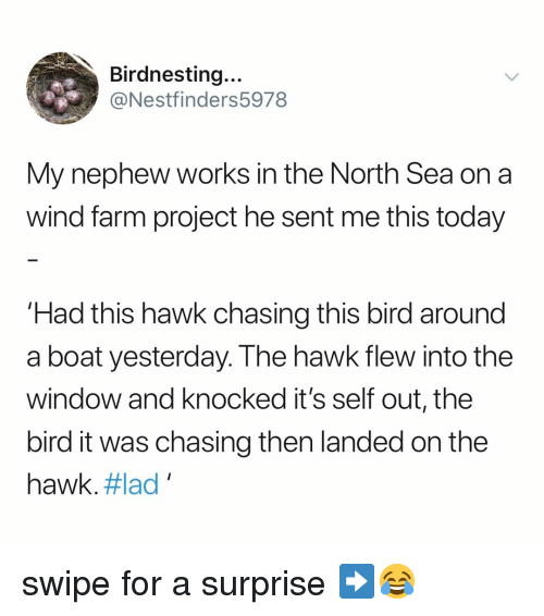 north sea: Birdnesting...  @Nestfinders5978  My nephew works in the North Sea on a  wind farm project he sent me this today  Had this hawk chasing this bird around  a boat yesterday. The hawk flew into the  window and knocked it's self out, the  bird it was chasing then landed on the  hawk. #lad , swipe for a surprise ➡️😂