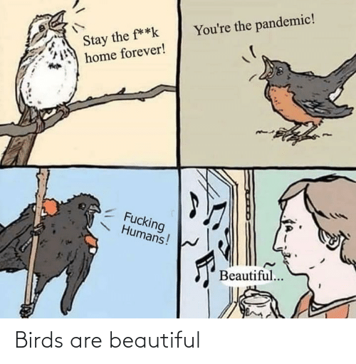 Birds: Birds are beautiful