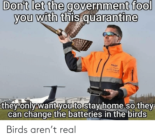 Birds: Birds aren't real