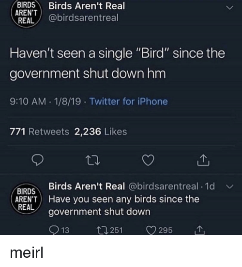 """Iphone, Twitter, and Birds: BIRDS Birds Aren't Real  ARENT  REAL @birdsarentreal  Haven't seen a single """"Bird"""" since the  government shut downhm  9:10 AM 1/8/19 Twitter for iPhone  771 Retweets 2,236 Likes  Birds Aren't Real @birdsarentreal 1d  BIRDS  AREN'T Have you seen any birds since the  REAL  government shut down  13  t1251 V295 meirl"""
