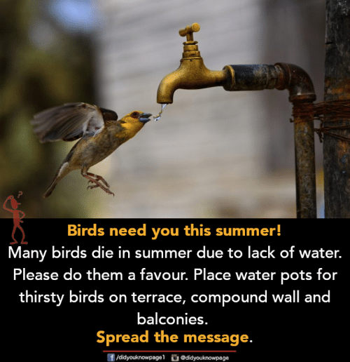 Memes, Thirsty, and Summer: Birds need you this summer!  Many birds die in summer due to lack of water.  Please do them a favour. Place water pots for  thirsty birds on terrace, compound wall and  balconies.  Spread the message.  ge