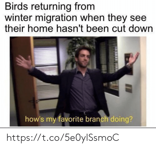 Returning: Birds returning from  winter migration when they see  their home hasn't been cut down  how's my favorite branch doing? https://t.co/5e0ylSsmoC